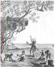 Illustration of the legend of monkeys harvesting tea - from Wikipedia